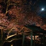 夜桜とスーパームーン