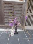 剪定した藤の花を